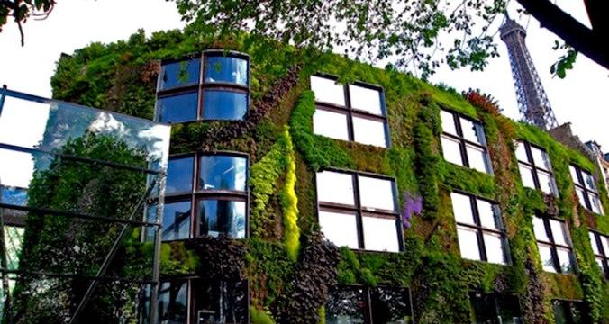 1_Moss-growing-concrete-CO2